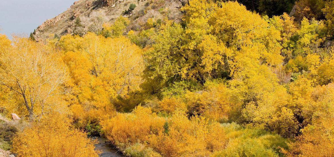 Clear Creek Colorado Fall Colors Getty Images