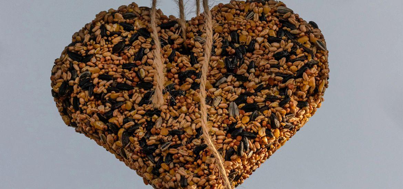 Bird Feeder Heart Tree Branch Getty Images