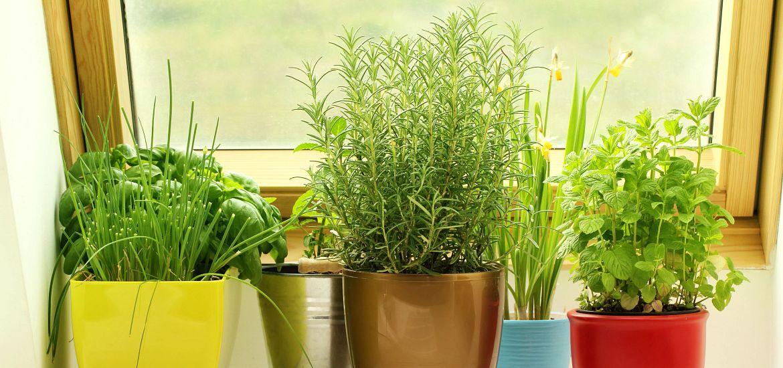 Herbs Growing Window Getty Images