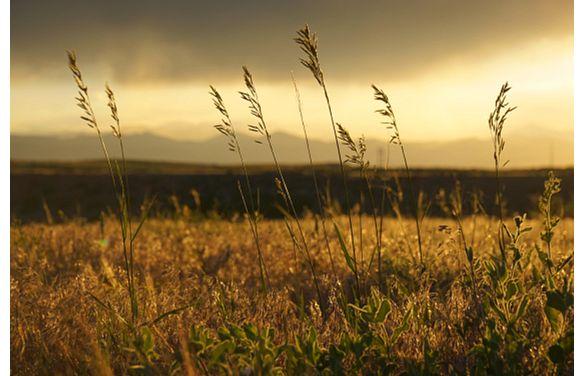 Lyric Field Sunset Mountains