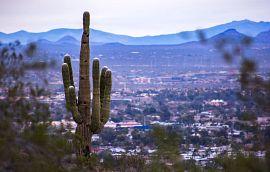 Cactus in Phoenix
