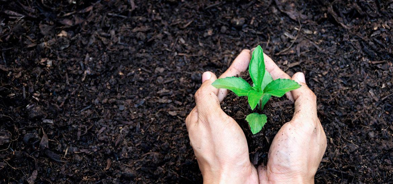 Hands Soil Garden Plant Getty Images