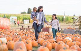 Family at a Pumpkin Farm
