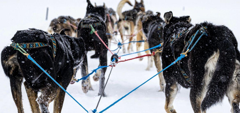 Dog Sledding Colorado Mountains Getty Image