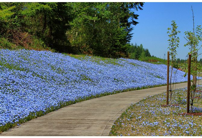 Trail with blue flowers