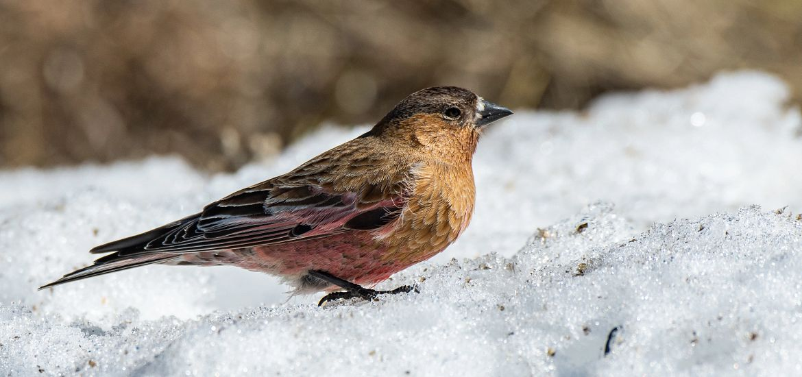 Bird Watching Snow Getty Images