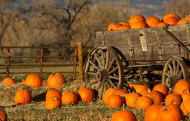 Pumpkin Patch Wagon Getty Images
